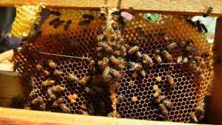 PT MBM Tawarkan Bisnis Madu Lebah Klanceng, Keuntungannya Menggiurkan