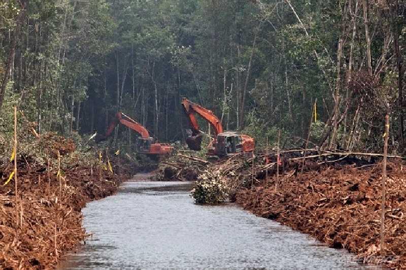 Pegiat Lingkungan Desak Perusahaan Komit Perbaiki Tata Kelola Gambut Riau