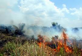 8 Hektar Lahan di Duri, Bengkalis Terbakar
