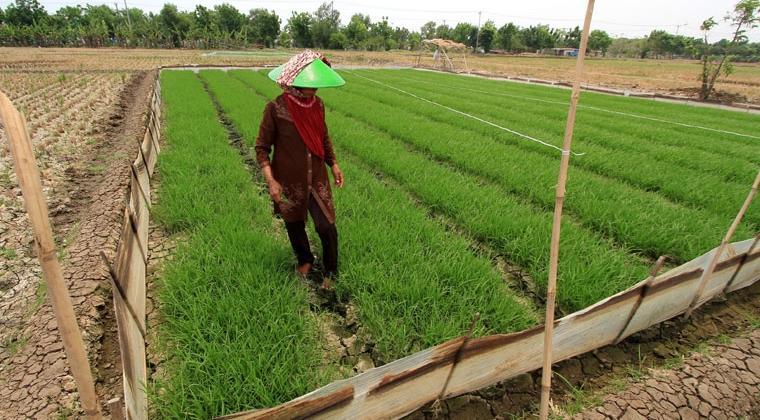 Pembangunan Ketahanan Pangan di Provinsi Riau