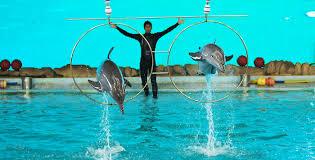 Aktivis Hewan Tolak Pertunjukan Lumba-lumba di Pekanbaru