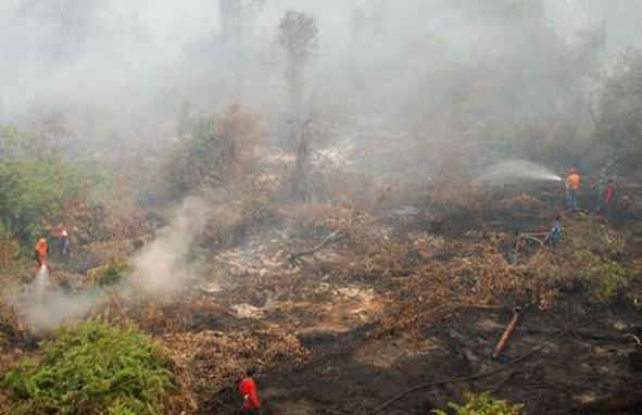 Komisi IV DPR: Pemerintah Tak Becus Cegah Kebakaran Hutan
