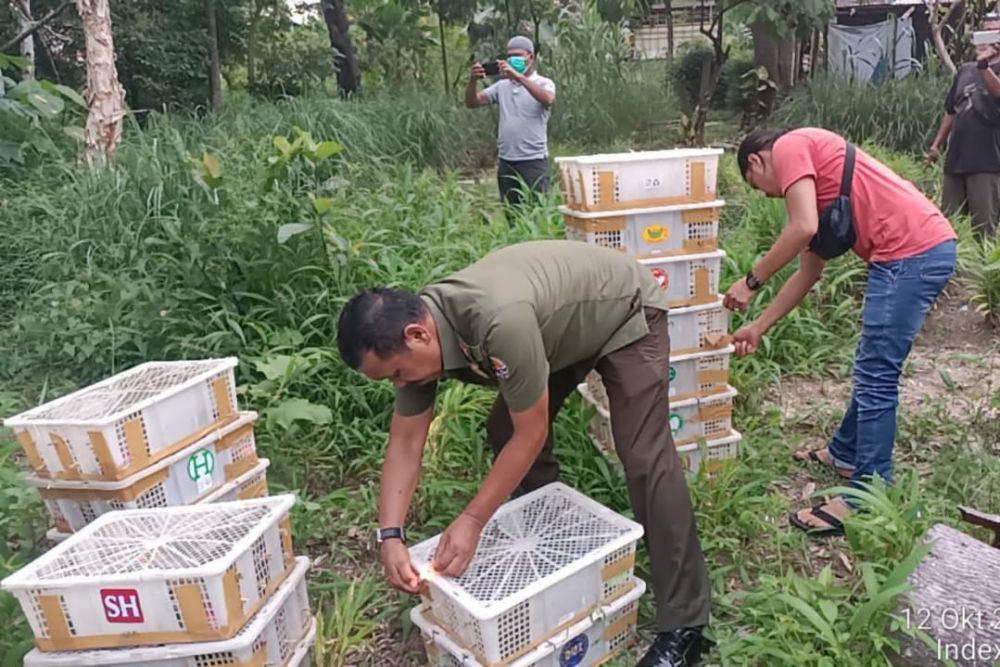Ratusan Burung Tanpa Dokumen Disita Balai Besar KSDA Riau