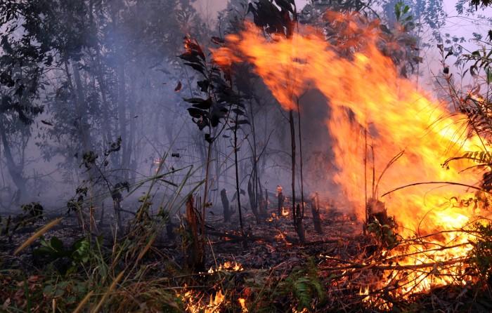 Polsek Tambang Amankan Seorang Pelaku Pembakaran Lahan