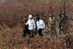 Presiden Jokowi: Tindak Tegas Pembakar Hutan