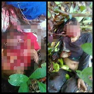 Beruang Liar Serang Warga di Kebun Karet 1 Meninggal dan 1 Bersimbah Darah