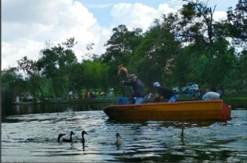 Taman Wisata Alam Mayang Pekanbaru Lepas 100 Ekor Bebek