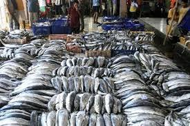 Harga Ikan di Pekanbaru Turun, Tongkol Rp42 Ribu Per Kilogram