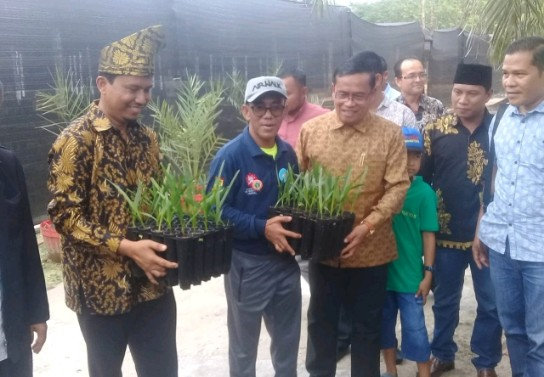 Pastikan Kurma Bisa Dibudidaya di Indonesia, PT KKI Ekspansi ke 5 Provinsi
