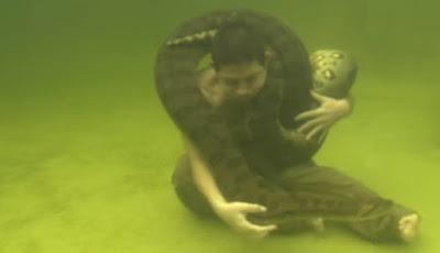 Anaconda Berenang Bersama Pria Paruh Baya
