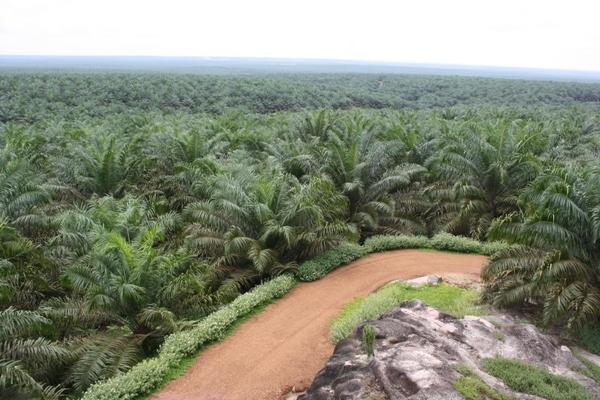 Bos Perusahaan Sawit HW Hutahaean Diperiksa Polda Riau