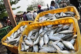Angka Konsumsi Ikan Riau Rendah, Dibawah Rata-rata Nasional