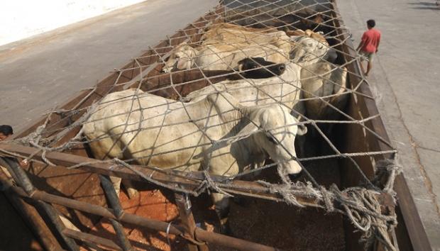 Kadin: Impor Daging Banyak, Harga Malah Melambung