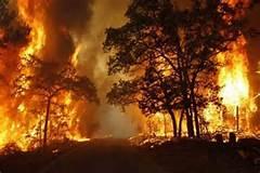 Sudah 3 Hari Kampar  di Landa Kebakaran Hutan