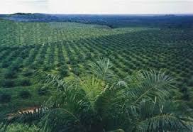 Polda Koordinasi dengan KKR Terkait Dugaan 33 Perusahaan Perambah Hutan