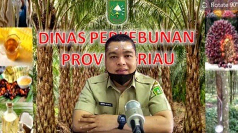 Ini Hal-hal yang Menyebabkan Naiknya Harga Sawit di Provinsi Riau