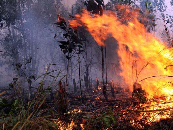 Diduga Bakar Lahan di Hutan Suligi, Tiga Warga Jadi Tersangka